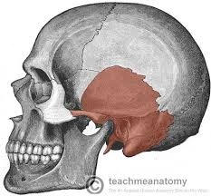 the temporal bone parts fractures teachmeanatomy