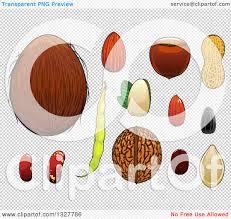 pumpkin no background clipart of a cartoon coconut almond hazelnut pistachio coffee