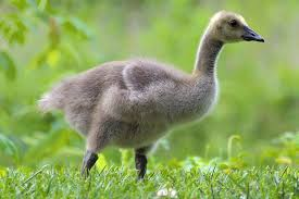 baby bird identification tips and tricks