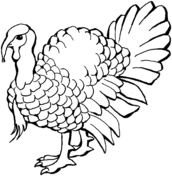 turkey coloring free printable coloring pages