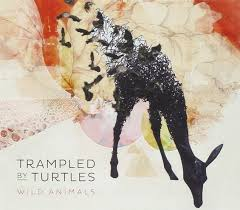 album review trampled by turtles wild animals the current trampled by turtles wild animals