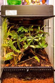 my second planted viv refurbishing my exo terra reptile forums