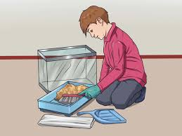 Hamster Cages Cheap How To Clean Out A Hamster Cage 12 Steps With Pictures