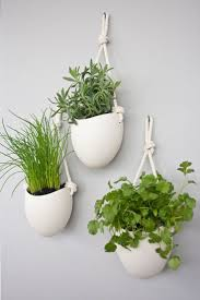 Small House Plants by Cool House Plants Peeinn Com