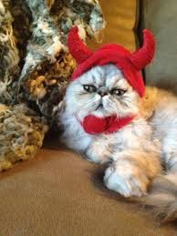 Cat Halloween Costumes Cats 5 Halloween Costume Ideas Persian Cats Purrs Grrs