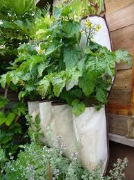 vertical vegetable garden designs ideas home design ideas