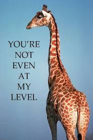 Giraffe Meme - 12 funny giraffe memes that will make your day funny giraffe