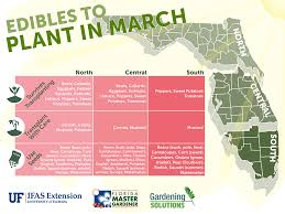 edibles fruits fruits and vegetables to plant in february for florida state