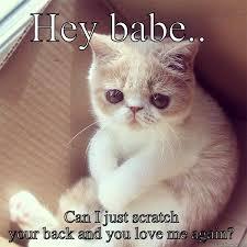Hey Babe Meme - hey babe quickmeme