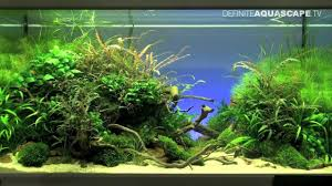 Planted Aquarium Aquascaping Aquascaping The Art Of The Planted Aquarium 2012 Part 1 Youtube