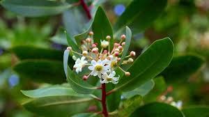 ketahuilah tujuh tanaman liar ini dipercaya bisa bikin pria perkasa