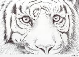 coloring pages alluring animal drawing ideas sketches easy