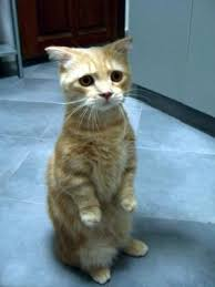 Sad Kitty Meme - sad kitty meme generator