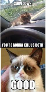 Christmas Grumpy Cat Meme - grumpy cat part 2 funny grumpy cat memes