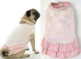 dog wedding dress the well dressed dog at a wedding bridesmaids ring bearing dogs