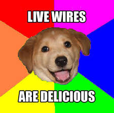 Advice Dog Memes - live wires are delicious advice dog know your meme