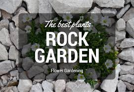 Rock Garden Plant The Best Plants For Rock Gardens My Gardening Network