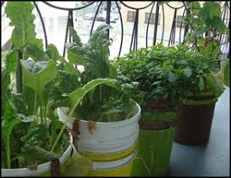 vegetable container gardening with self watering planters
