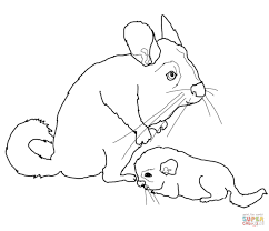 chinchillas coloring pages free coloring pages