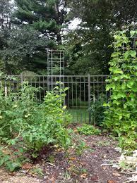 climbing plants archives extravagant gardens