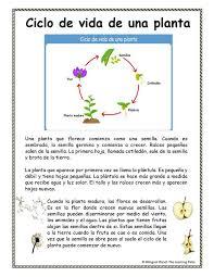 The Learning Patio Life Sciences Ciencias De La Vida The Learning Patio