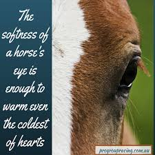 Horse Riding Meme - warm eyes horse racing meme social media management agency sydney