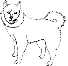 dog color pages printable dog coloring pages scroll
