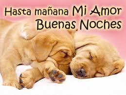 imagenes tiernas buenas noches amor imágenes de perritos tiernos con frases de buenas noches