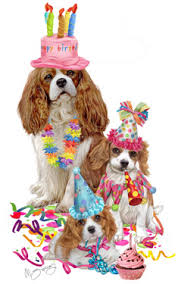 shop for cards cavalier king charles spaniel