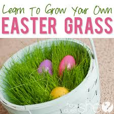 easter basket grass your own easter basket grass