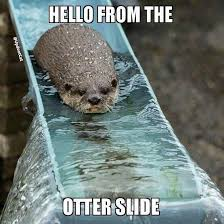 Hilarious Animal Memes - heal the bay on otters adele and memes