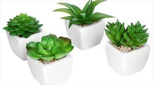 plant on desk feel fresh with desk plants baby desk plants feng shui youtube