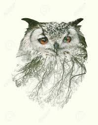 exposure portrait of owl and tree branch stock photo picture