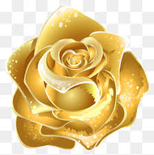 gold roses gold roses png images vectors and psd files free on