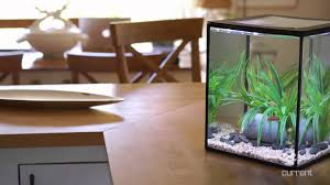 Fish Tank Desk by Solo Desktop Aquarium With Remote Controlled Led Lighting Youtube