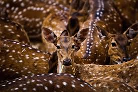 Best Photography Nature Wildlife World Photography Organisation