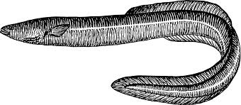eel clip art free images clipart to use wikiclipart