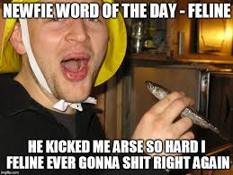Word Meme - newfie word of the day imgflip
