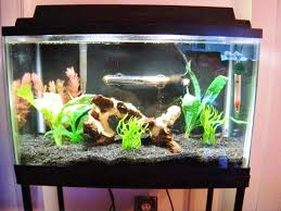 Aquarium Decoration Ideas Freshwater Fish Tank Pictures Realistic Fish Tank Decoration Ideas