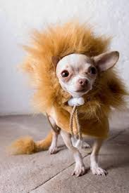 Halloween Animal Costumes by 79 Best Pet Halloween Costumes Images On Pinterest Pet Costumes