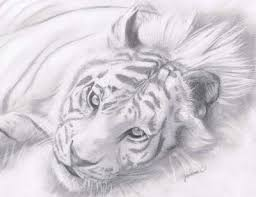 photos great pencil drawings of nature drawing art gallery