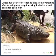 Crocodile Meme - crocs memes best collection of funny crocs pictures