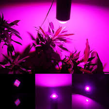 pink light bulbs for christmas tree lighting designs ideas