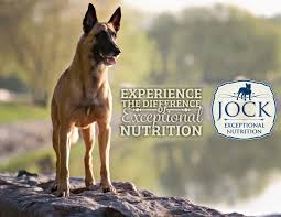 belgian sheepdog origin know your breed belgian shepherd jock dog food