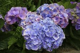 the short list the 5 most popular flowers on cape cod