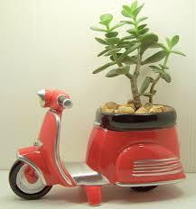 succulent jade planter red scooter diy kit desk accessories dorm
