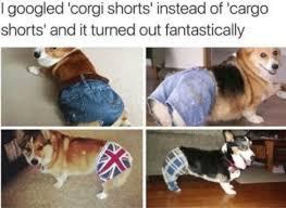 the best corgi memes memedroid