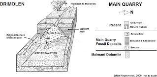 macromammalian faunas biochronology and palaeoecology of the