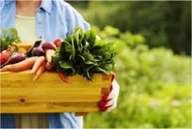 Gardening Zones - understanding gardening zones homesteader depot