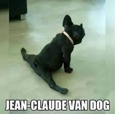 French Bulldog Meme - 10 best french bulldog memes of all time